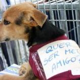 Feira de Adoção de Cães e Gatos no Barreiro