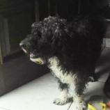 Procura-se o tuto de cão achado em Santa Treza