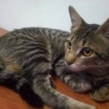 Quem conhece esta gatinha?