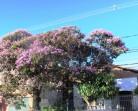 Primavera em Santa Tereza