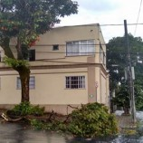 Chuva derruba árvores em Santa Tereza