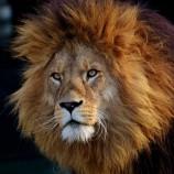 Imposto de Renda – Hora do Leão