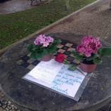 Flores para Faride