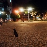 Nova iluminação na Praça Duque de Caxias